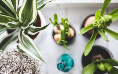 Seven Indoor Houseplants Anyone Can Keep Alive!